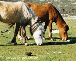 Σκύρος: Εντυπωσιάζει με την ποικίλη μορφολογία της